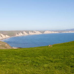 Out at Point Reyes National Seashore