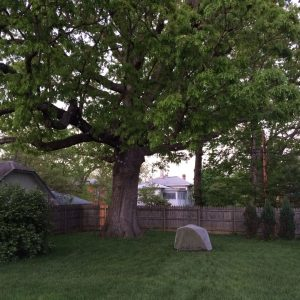 Camping under the old oak tree.
