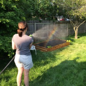 Watering with the rain barrel