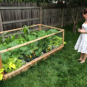 Corn, beans, kale, carrots, squash, rosemary, sunflowers. We might have gone a bit nuts for an 8'x4' garden.