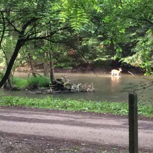 Just wading upstream.
