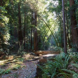 Muir Woods, one of our favorite places